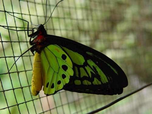 Kupu-kupu di Butterfly Park Borobudur
